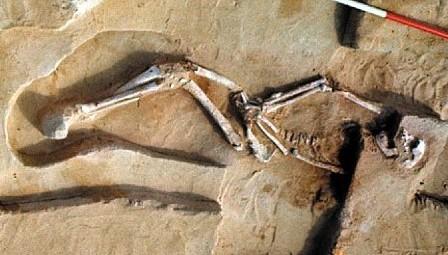 Pierwsi Australijczycy znad jeziora Mungo