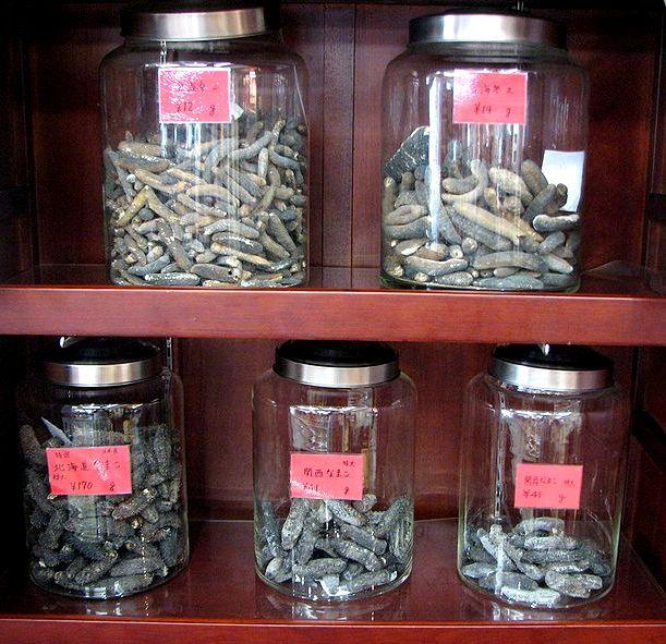 Suszone strzykwy stosowane w tradycyjnej chińskiej medycynie. Fot. Chris 73. Creative Commons