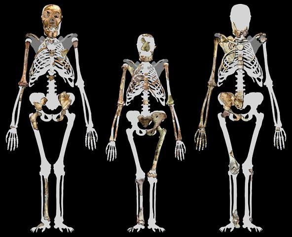 Australopithecus sediba i Lucy. Rys. Profberger. Creative Commons