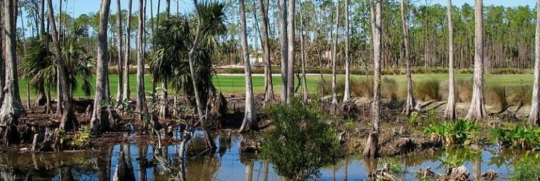 Zalesione wyspy z Everglades na Florydzie
