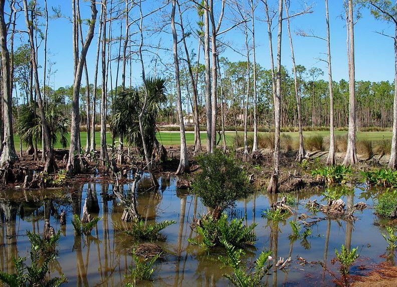 Park Narodowy Everglades. Fot. Marc Ryckaert