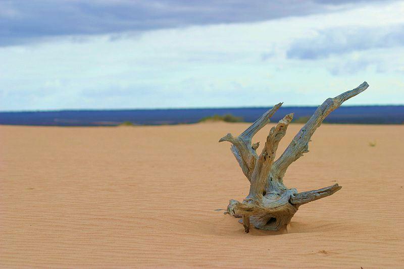 Park Narodowy Mungo w Australii. Fot. Newsjunkie93.  Creative Commons