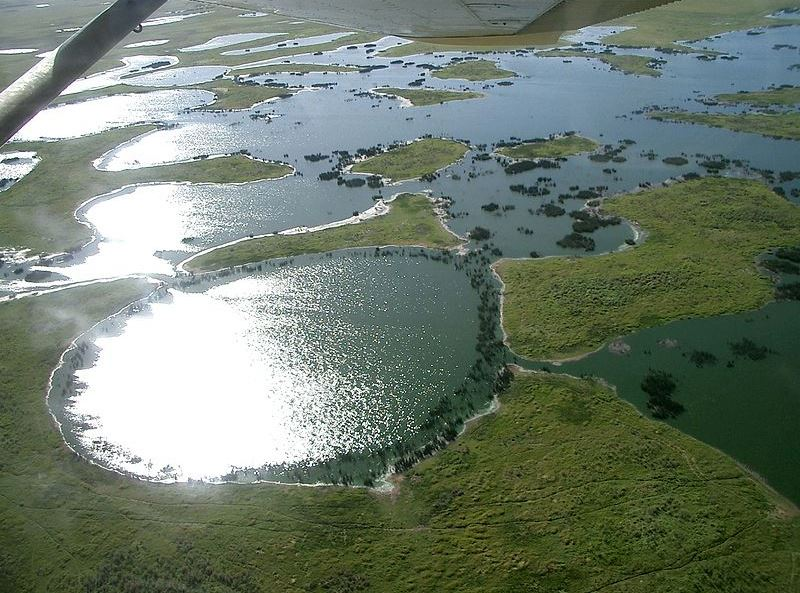 Równina aluwialna Pantanal w Brazylii. Fot. Alicia Yo. Creative Commons