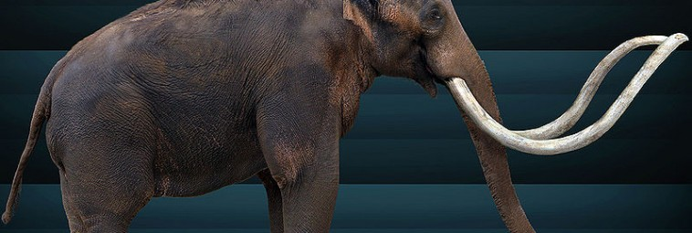 O petroglifie mamuta z Utah słów kilka