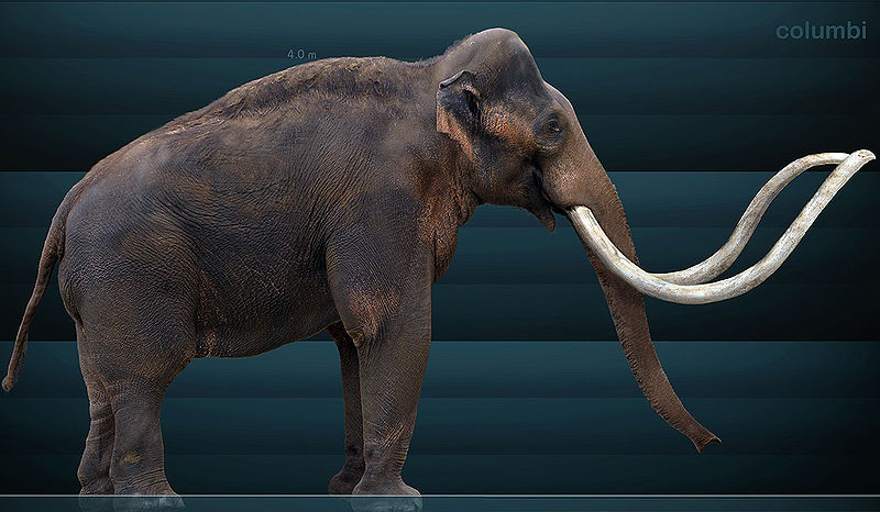 Rekonstrukcja mamuta kolumbijskiego. Fot. Sergiodlarosa. Creative Commons