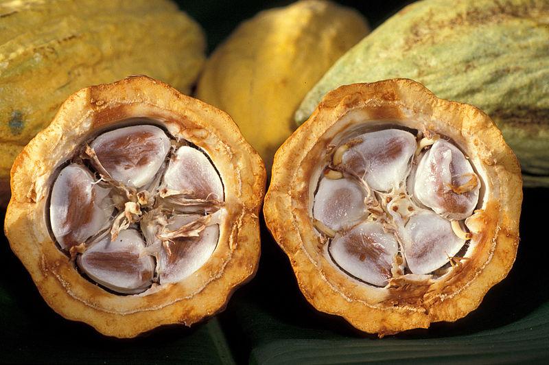 Ziarna kakao. Creative Commons