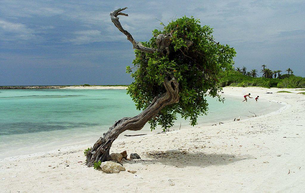 Plaże Aruby. Fot. Serge Melki. Creative Commons