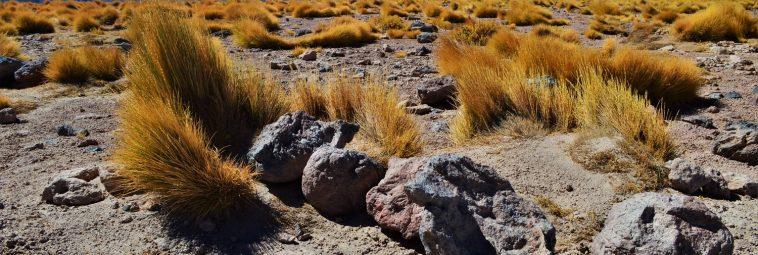 Chilijska Atakama: sól, piach i kolory