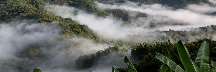 Lasy deszczowe Azji Południowo-Wschodniej pod lupą badaczy
