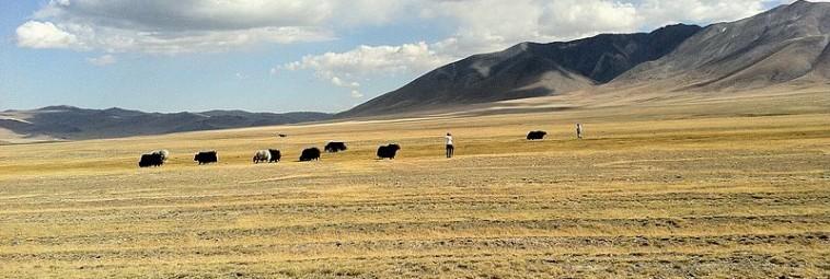 Sztuka naskalna i archeologia Ałtaju Mongolskiego [FILM]