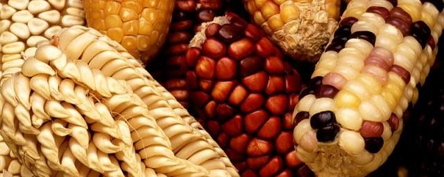 Mieszkańcy Peru jedli kukurydzę wcześniej niż sądzono