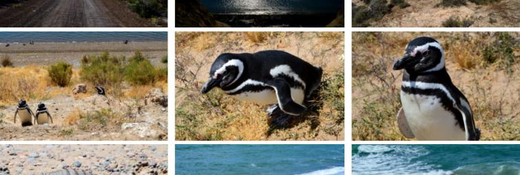 U wrót Patagonii: Półwysep Valdés