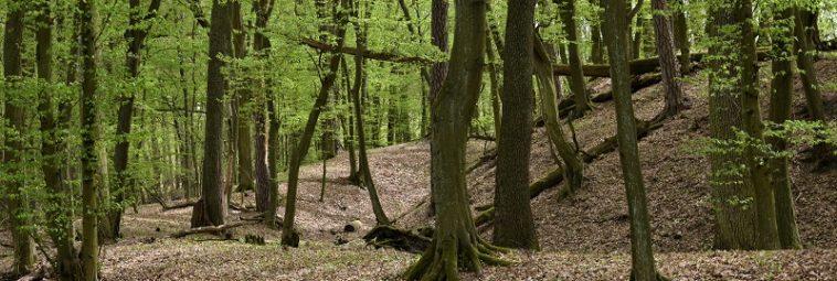 Zamczysko – średniowieczne grodzisko w sercu Puszczy Kampinoskiej